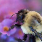 flower's delight by katpartridge