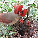 Cardinal Family by chetzajac