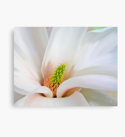 White Magnolia flower, floral art Canvas Print