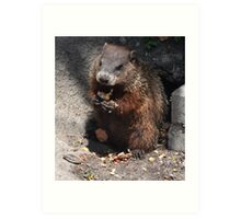 Baby Groundhog Art Print