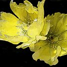 Cacti Flowers in Yellow by Rosalie Scanlon