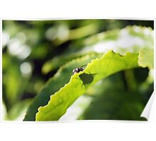 Hide and Seek Fly on Passion Fruit Vine Poster