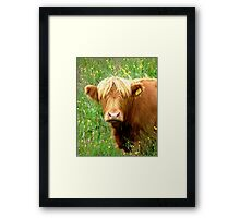 Buttercup says ' Who said beefburger ?'............ Framed Print