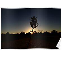 Silhouettic, Pinnacles, WA Poster