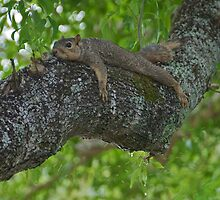 Laid back in the afternoon by Ann Reece