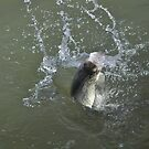 The splash by denahickman