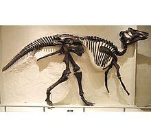 Strong Maiasaura Photographic Print