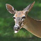 Deer by denahickman