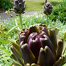 three artichokes by tego53