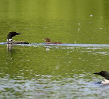 Loon Family by Mully410