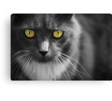PC Eyes Canvas Print