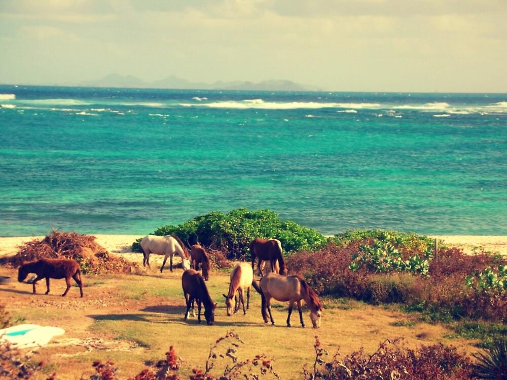 Seaside grazing - Saint Martin   by islefox