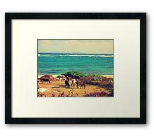 Seaside grazing - Saint Martin   Framed Print
