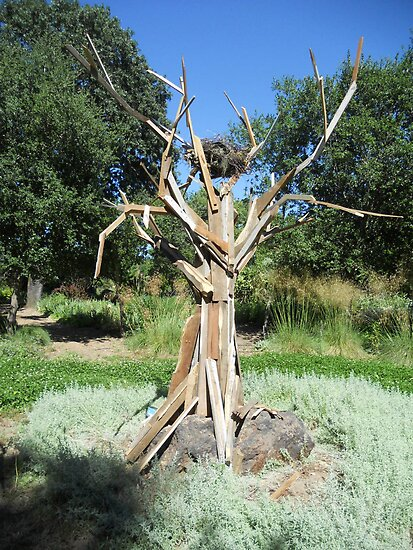 My Tree at Campovida in Hopland CA. by Sam Dantone