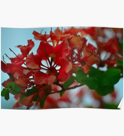 Vivid Blooms Poster