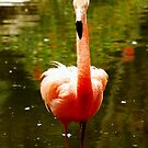 flamingo by CriGa Photography