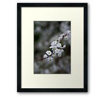 """""""Blossoms"""" Framed Print"""