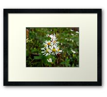Fall flowers. Framed Print