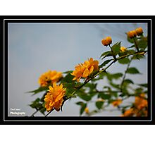Look Through my Window! Photographic Print