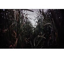 Crop Texture Photographic Print