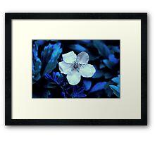 Ness Gardens,  Framed Print