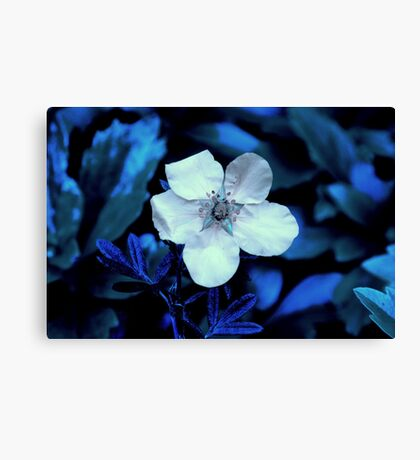 Ness Gardens,  Canvas Print