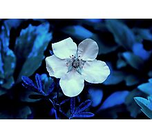 Ness Gardens,  Photographic Print