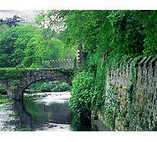 Spring Greenery Photographic Print