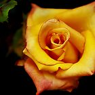 yellow rose by Thauchengcha