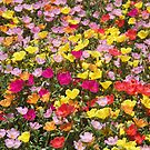 Summer garden by jozi1
