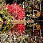 National Rhododendron Garden-Olinda by Margi