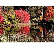 National Rhododendron Garden-Olinda Photographic Print
