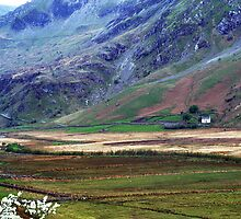 Wales - and the hawthorn was out by nadine henley