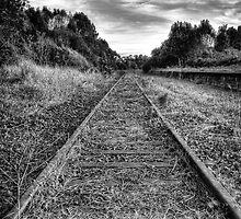 Booyong Express. by vilaro Images