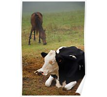 Cow and horse Poster