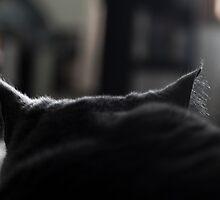 All ears by Jocelyn  Parry-Jones