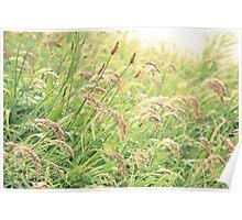 Wild gramineous plants Poster