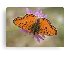 Male Spotted Fritillary Canvas Print