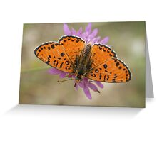 Male Spotted Fritillary Greeting Card