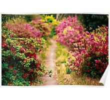 Footpath with azaleas Poster