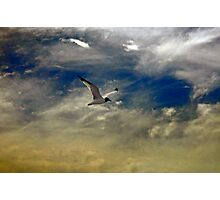 Flight of the Seagull Photographic Print
