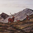 `Cabrach Stags' Red Deer in Scotland by sharpie