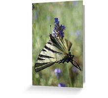 Scarce Swallowtail Greeting Card