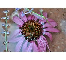 Reflected and Purple - Flower in Bowl of Water Photographic Print