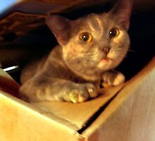 Boxed and Ready  by hickerson