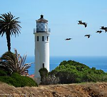 Lighthouse and Pelicans 1 by David Denny