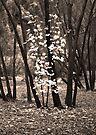 Autumn - the season of the little death by Odille Esmonde-Morgan