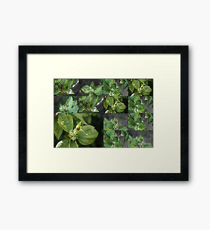 DIFFERANT LADYBIRD'S COLLAGE Framed Print