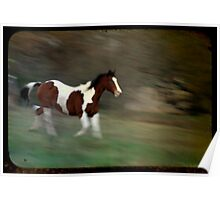 TTV Horse Photo. Poster