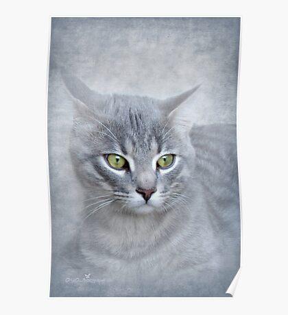 Rain (Feline portrait) Poster